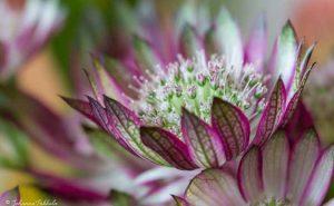 Yksityiskohta kukkakimpusta